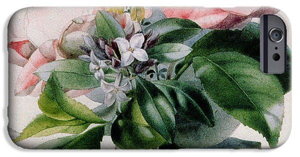Camellia iPhone Cases - Camellia and Broom iPhone Case by Marie-Anne