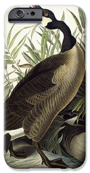 Geese iPhone Cases - Canada Goose iPhone Case by John James Audubon