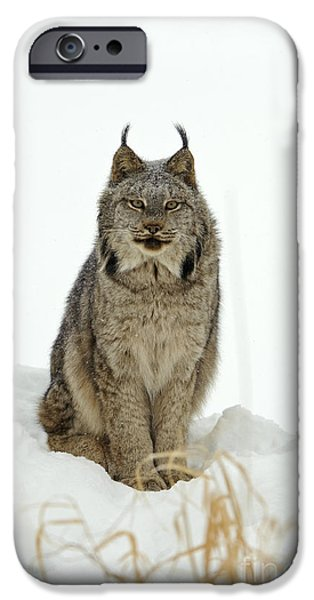 Lynx iPhone Cases - Canadian Lynx iPhone Case by John Shaw