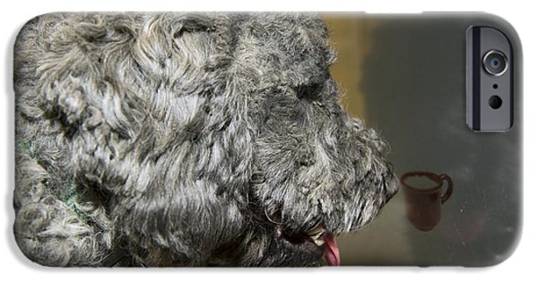 Nature Study iPhone Cases - Canine Research iPhone Case by Louise Murray