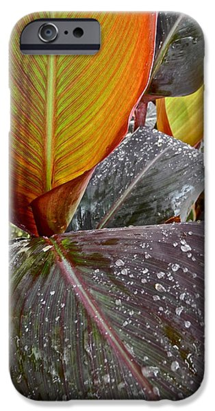 Canna Lily I  iPhone Case by Kirsten Giving