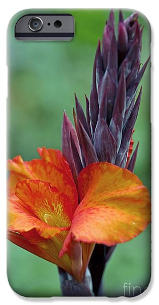 Canna iPhone Cases - Canna Sp iPhone Case by Dr. Keith Wheeler