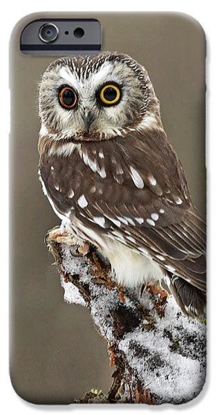 Captivation iPhone Case by Inspired Nature Photography By Shelley Myke