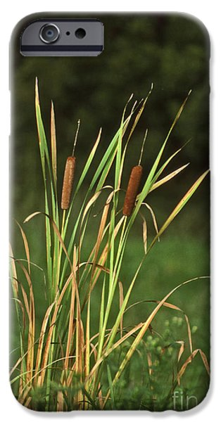 Pictures Of Cats Photographs iPhone Cases - Cat Tails iPhone Case by Skip Willits