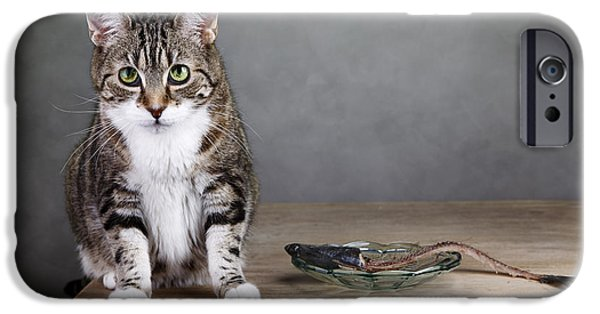Housecat iPhone Cases - Caught in the act iPhone Case by Nailia Schwarz