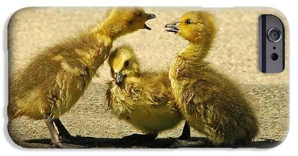 Baby Bird iPhone Cases - Caught in the Middle iPhone Case by Olivia Hardwicke