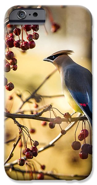 Cedar Waxwing iPhone Case by Bob Orsillo