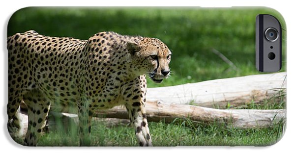 Smithsonian National Zoological Park iPhone Cases - Cheetah iPhone Case by Carol Ailles