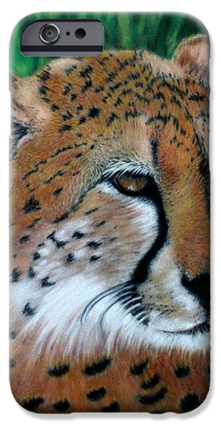 Child iPhone Cases - Cheetah iPhone Case by Carol McCarty