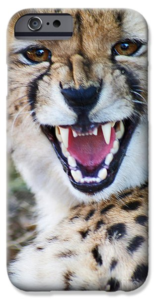 Young Paintings iPhone Cases - Cheetah With Attitude iPhone Case by Stanza Widen