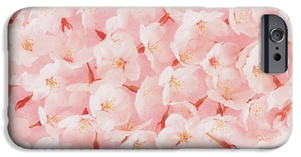 Pinkish iPhone Cases - Cherry Blossom iPhone Case by Panoramic Images