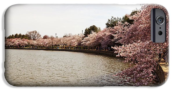Cherry Blossoms iPhone Cases - Cherry Blossom Trees At Tidal Basin iPhone Case by Panoramic Images