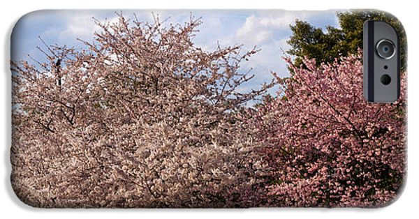 Cherry Blossoms iPhone Cases - Cherry Blossom Trees In Full Bloom iPhone Case by Panoramic Images