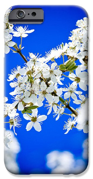 Close Focus Nature Scene iPhone Cases - Cherry blossom with blue sky iPhone Case by Raimond Klavins