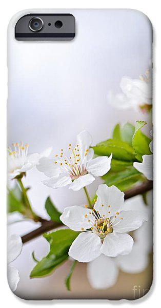 Cherry Blossoms Photographs iPhone Cases - Cherry blossoms iPhone Case by Elena Elisseeva