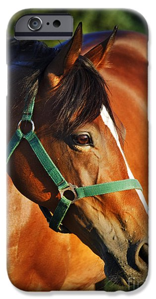 Summer Pyrography iPhone Cases - Chestnut horse iPhone Case by Jelena Jovanovic