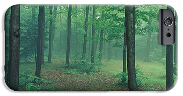 Forest Floor iPhone Cases - Chestnut Ridge Park, Orchard Park, New iPhone Case by Panoramic Images