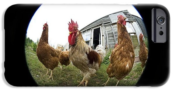Cut-outs iPhone Cases - Chickens iPhone Case by Georgette Douwma