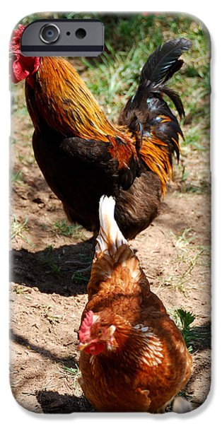 Eastern Wild Turkey iPhone Cases - Chickens iPhone Case by Thea Wolff