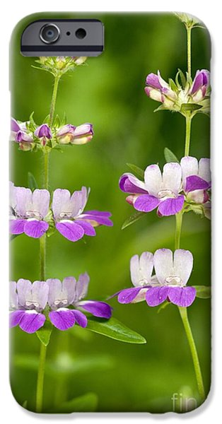 Innocence iPhone Cases - Chinese Houses Collinsia Heterophylla iPhone Case by Bob Gibbons