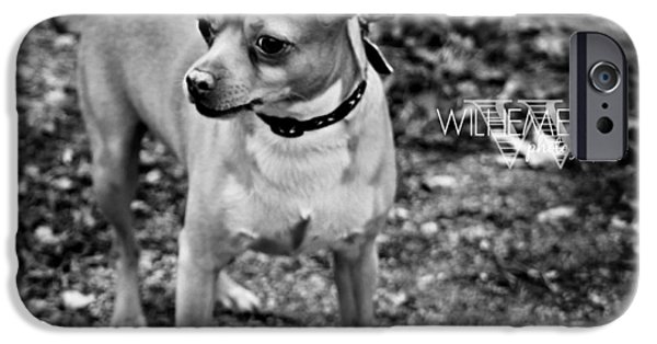 Chiwawa iPhone Cases - Chiwawa/Pitbull Mix iPhone Case by Wilhemenia Williams