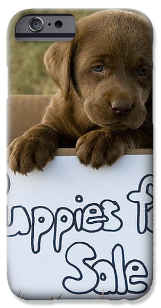 Chocolate Labrador Puppy iPhone Case by Linda Freshwaters Arndt