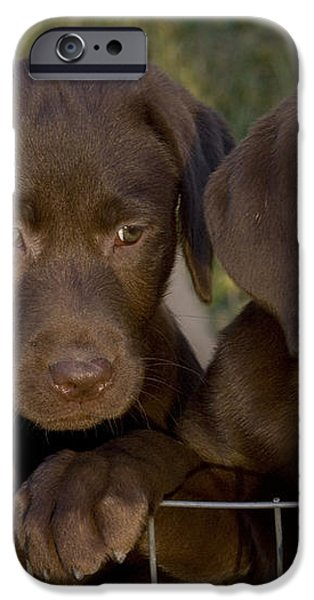 Chocolate Labrador Retriever Pups iPhone Case by Linda Freshwaters Arndt