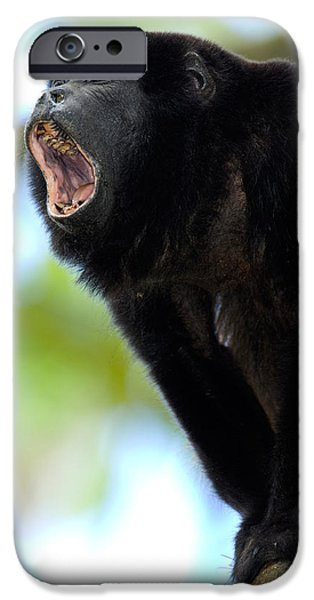 Frustration iPhone Cases - Close-up Of A Black Howler Monkey iPhone Case by Panoramic Images