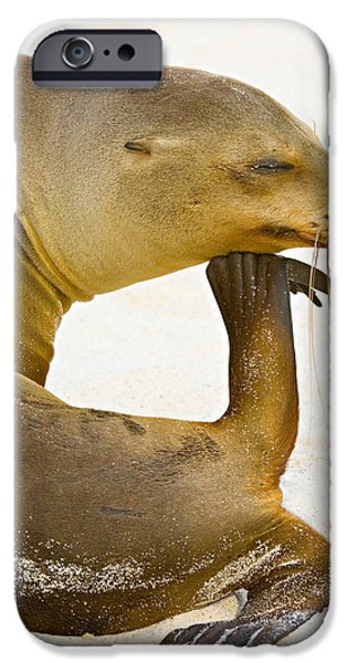 Sea Animals iPhone Cases - Close-up Of A Galapagos Sea Lion iPhone Case by Panoramic Images