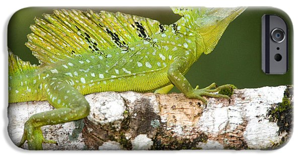 Fauna iPhone Cases - Close-up Of A Plumed Basilisk iPhone Case by Panoramic Images