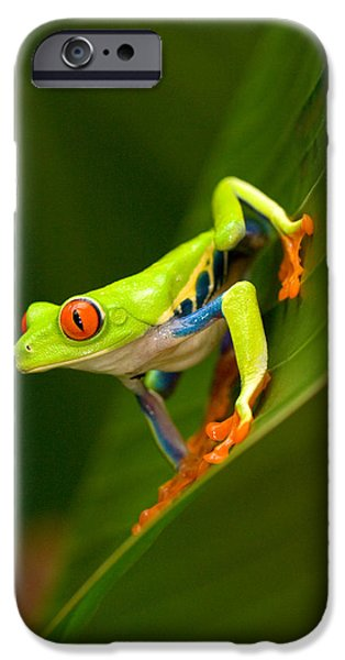 Fauna iPhone Cases - Close-up Of A Red-eyed Tree Frog iPhone Case by Panoramic Images