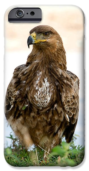 East Africa Photographs iPhone Cases - Close-up Of A Tawny Eagle Aquila Rapax iPhone Case by Panoramic Images