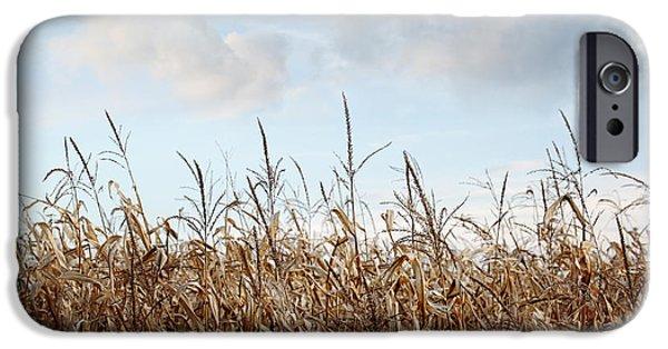 Corn iPhone Cases - Closeup of corn stalks  iPhone Case by Sandra Cunningham