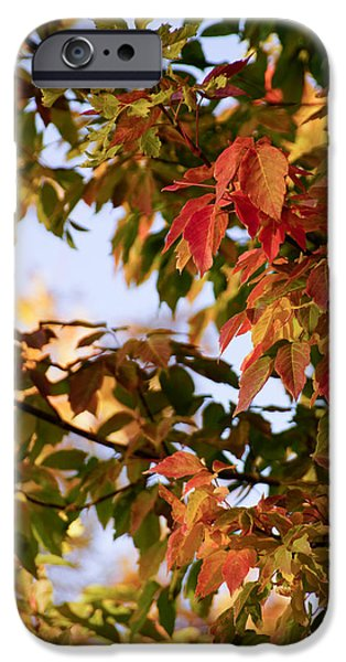 Photography iPhone Cases - Colorful leaves iPhone Case by Gloria Pasko