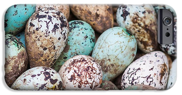 Group Of Objects iPhone Cases - Common Guillemot Eggs, Uria Aalge iPhone Case by Panoramic Images