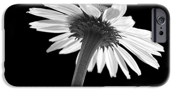 Echinacea iPhone Cases - Coneflower iPhone Case by Tony Cordoza