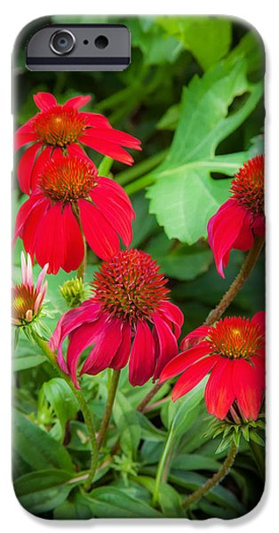 Abstracted Coneflowers iPhone Cases - Coneflowers Echinacea Red Painted  iPhone Case by Rich Franco
