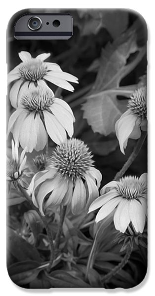 ConeFlowers Echinacea Rudbeckia BW iPhone Case by Rich Franco