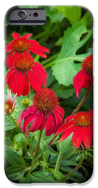 Abstracted Coneflowers iPhone Cases - ConeFlowers Echinacea Rudbeckia iPhone Case by Rich Franco