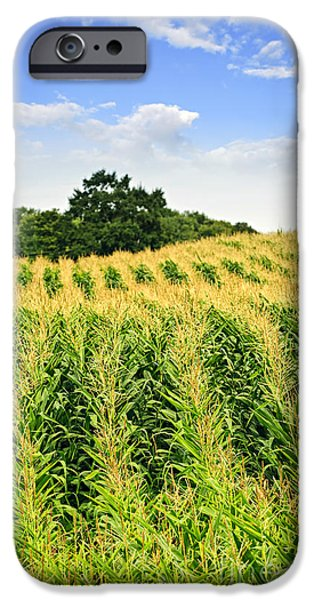 Crops iPhone Cases - Corn field iPhone Case by Elena Elisseeva