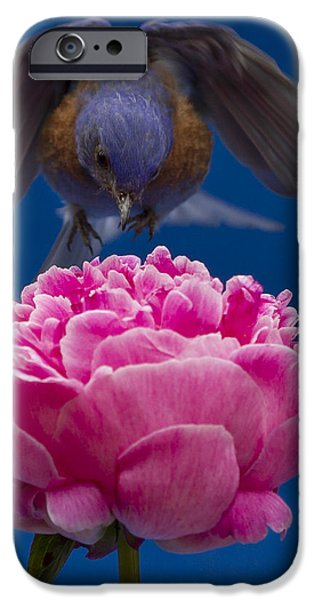 Count Bluebird iPhone Case by Jean Noren