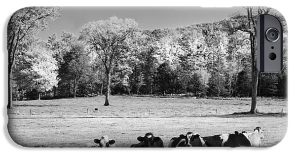 Rural Scenes Digital Art iPhone Cases - Cows Resting On Grass In Farm Field Autumn Maine Photograph iPhone Case by Keith Webber Jr