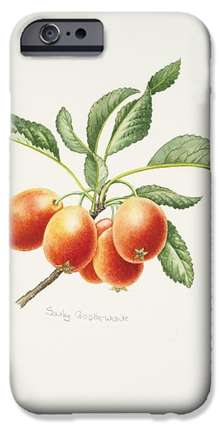 Apple iPhone Cases - Crab Apples iPhone Case by Sally Crosthwaite