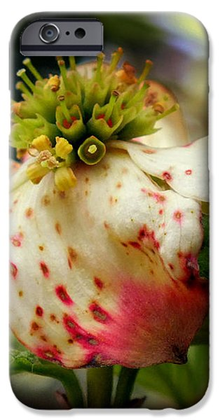 Cranberry Dogwoods iPhone Case by KAREN WILES