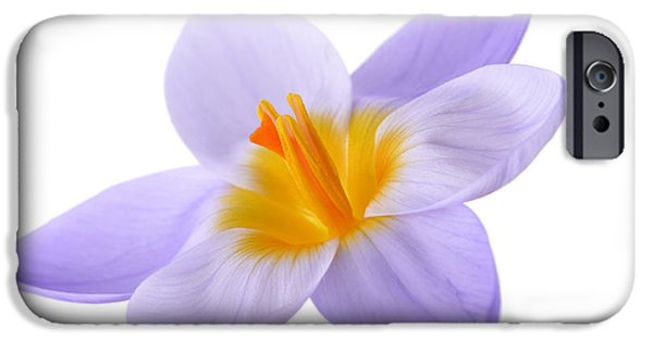 Beauty Mark iPhone Cases - Crocus iPhone Case by Mark Johnson