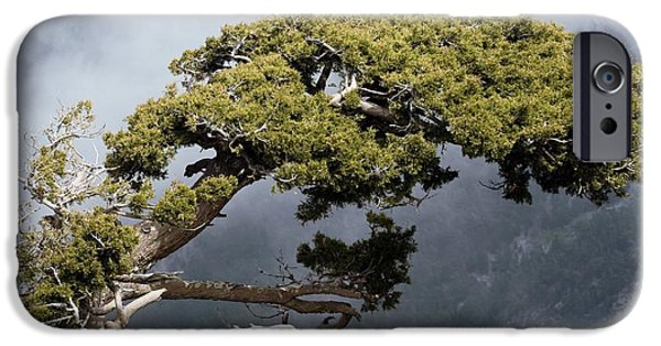 Overhang iPhone Cases - Cypresses Cupressus Sempervirens iPhone Case by Bob Gibbons