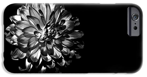 Dahlia iPhone Cases - Dahlia on Black iPhone Case by Mark Rogan