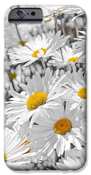 Blossom iPhone Cases - Daisies in garden iPhone Case by Elena Elisseeva