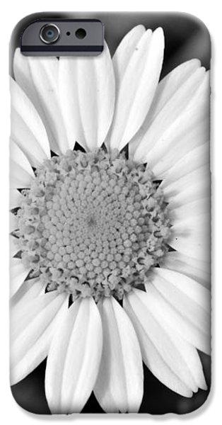 Daisy flower iPhone Case by George Atsametakis