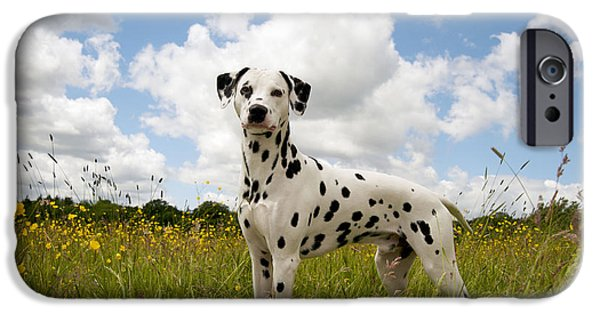 Dog And Wildflowers iPhone Cases - Dalmatian In Field iPhone Case by John Daniels